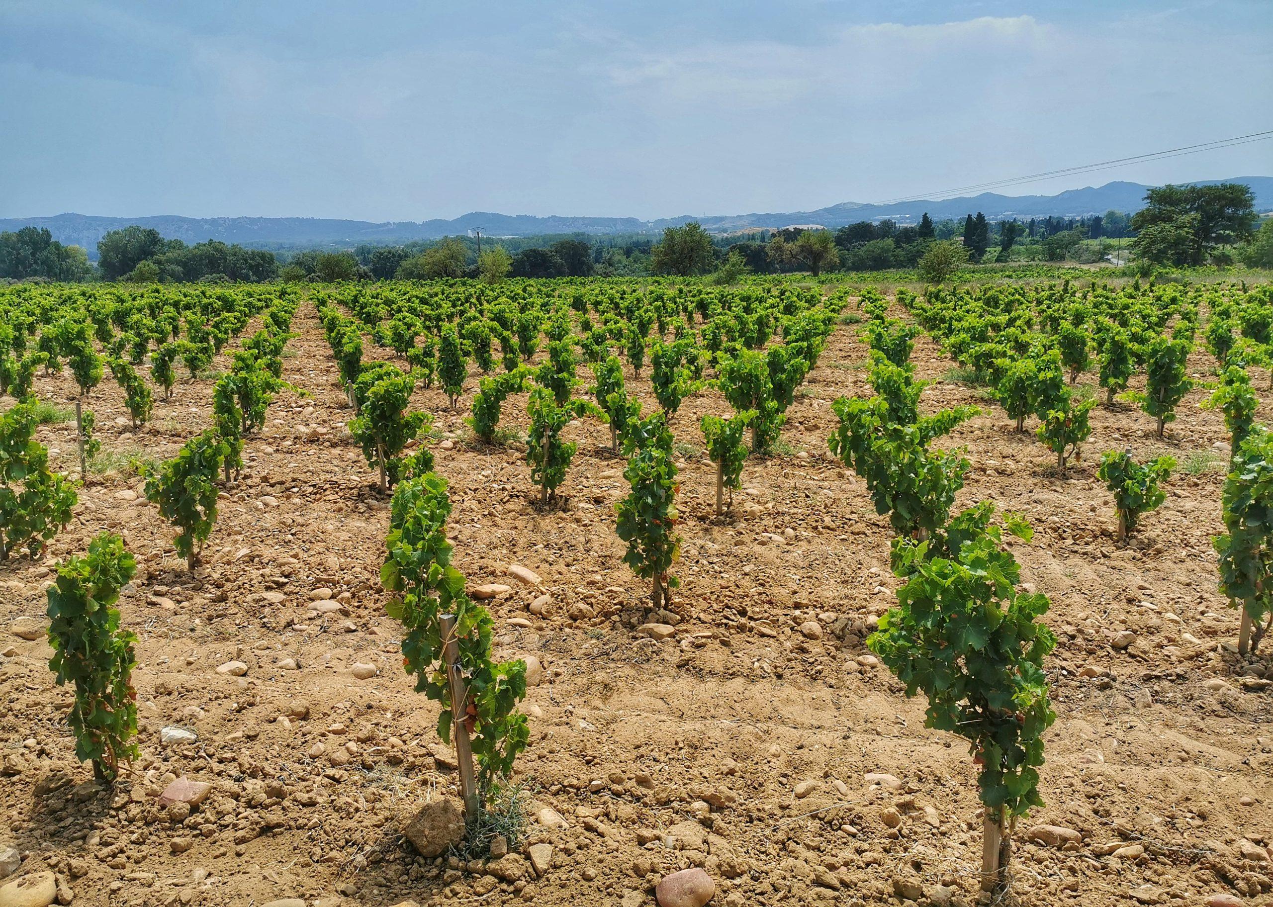 L'inventaire des principaux travaux de la vigne et leurs objectifs