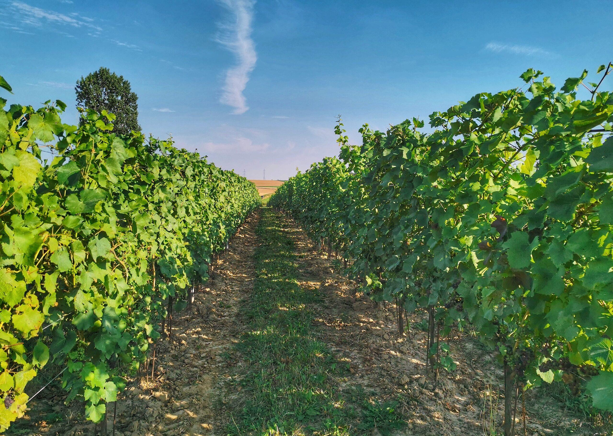 Quelles sont les nouvelles formations dans le secteur du vin en Belgique francophone?