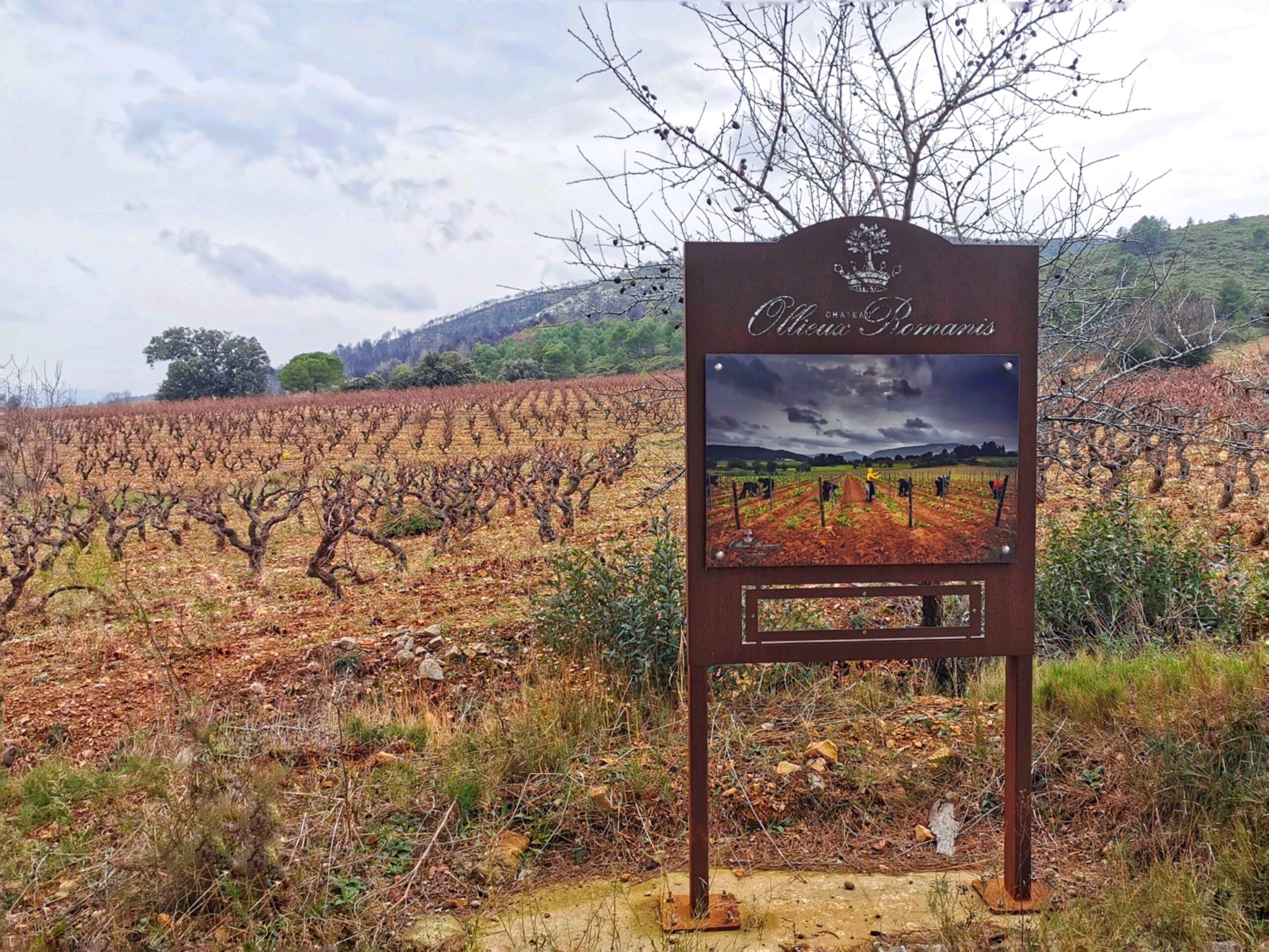 Pierre Bories, vigneron et artisan du renouveau à Corbières