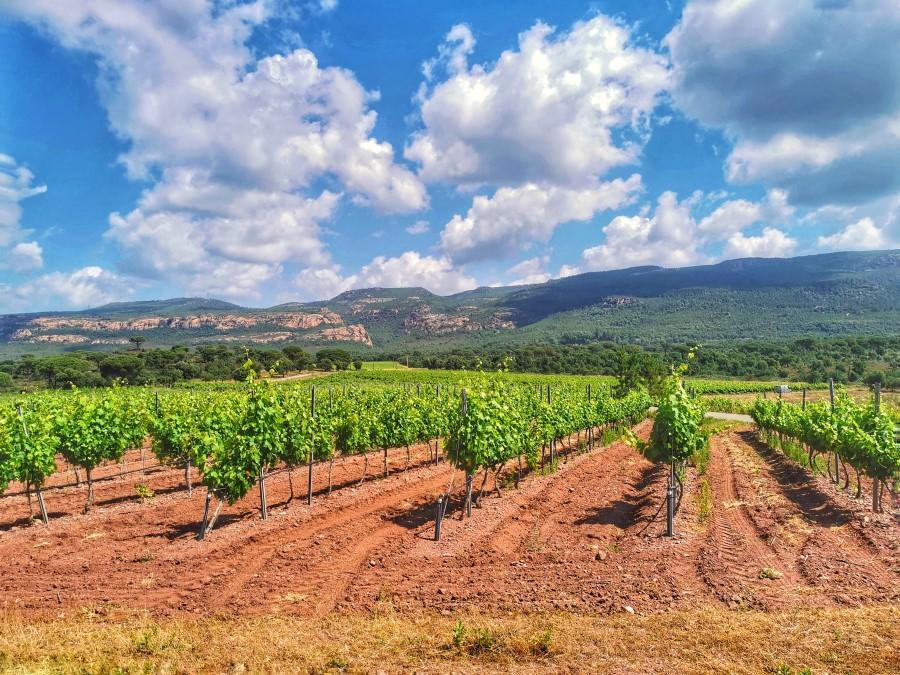 Vins blancs en AOC Côtes de Provence, une richesse méconnue